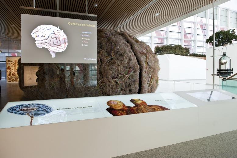 Museo de la Evolucion Humana.